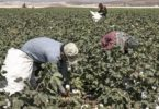 Black Middle Middle School Students Ordered To Pick Cotton