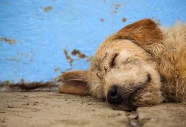 arthur-el-perro-abandonado-que-participo-en-una-competencia-de-aventura-en-ecuador-hoy-viaja-suecia-para-iniciar-una-vida-feliz 08